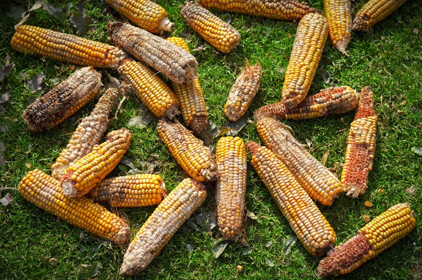 A cada ano, pragas destroem 40% das culturas em todo o mundo