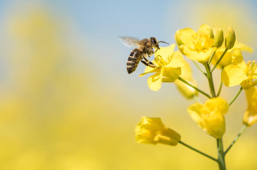 Agricultura e biodiversidade, um equilíbrio obrigatório