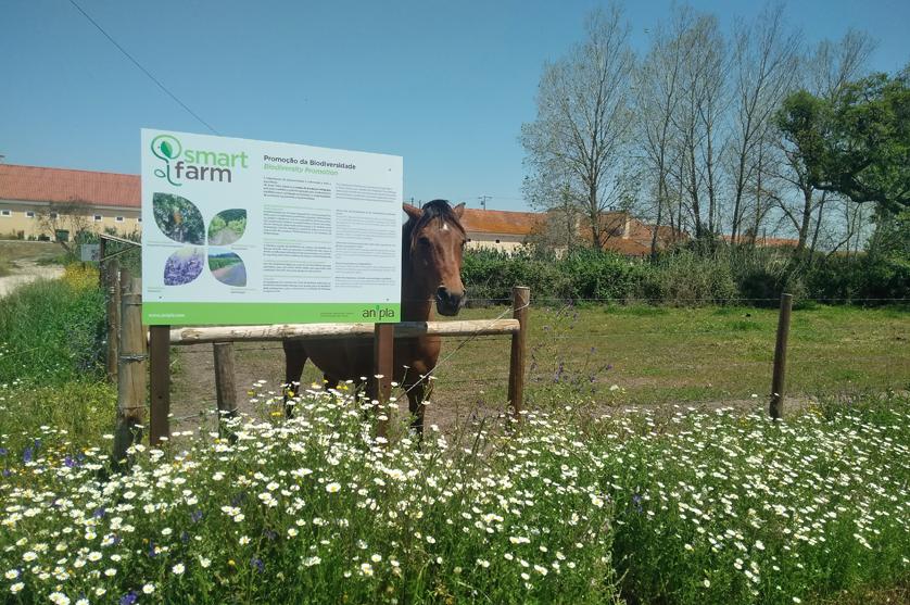 A produtividade Agrícola e a Promoção da Biodiversidade.