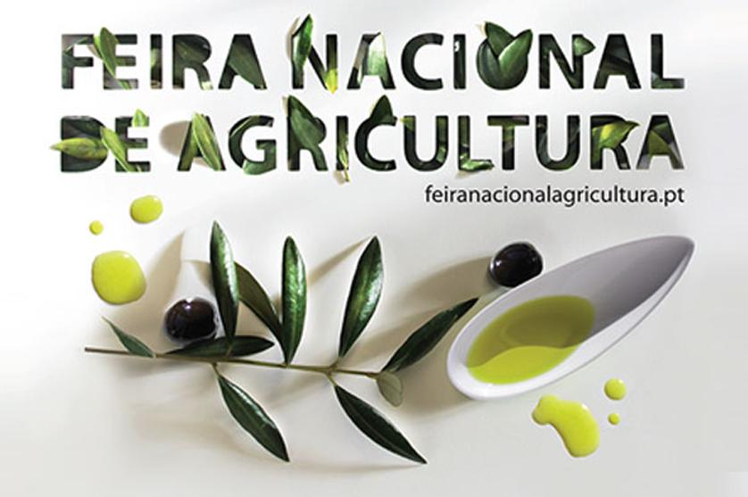 Portugal é cada vez mais um país de olival e azeite