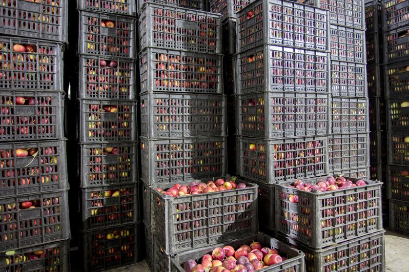 Exportações agroalimentares da UE aumentam 3,7%