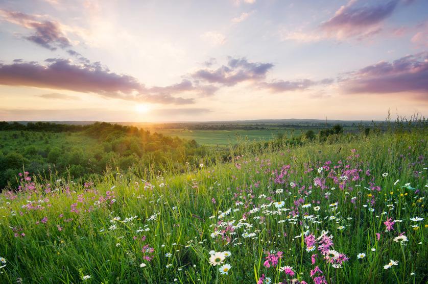 Reduzidos requisitos relativos à diversificação de culturas e às áreas de interesse ecológico