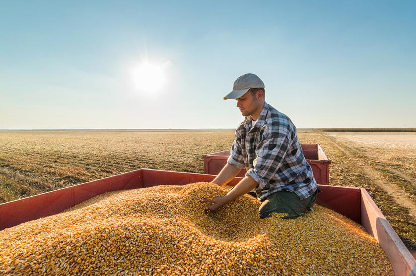 Produção de alimentos tem de aumentar 60% para responder à procura