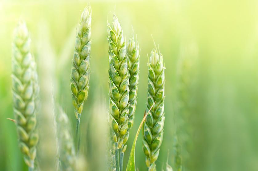 Estratégia para a agricultura biológica soma e segue.