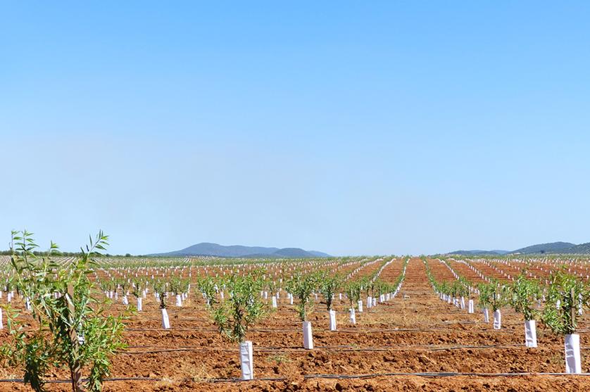 Agricultura com mais dinheiro para investir em 2019.