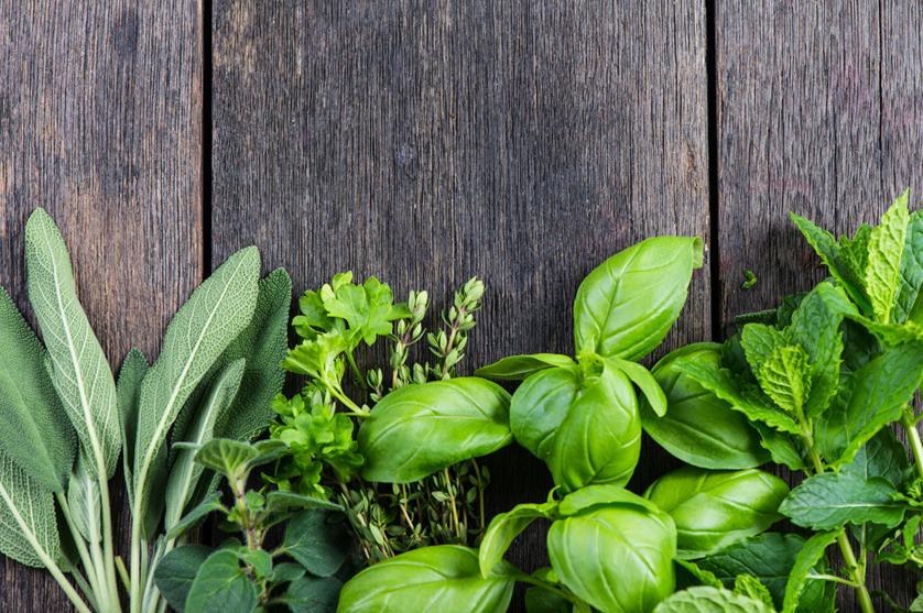 Produção de ervas aromáticas ganha terreno.