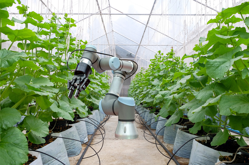 Agricultura com mais robots e isso é bom