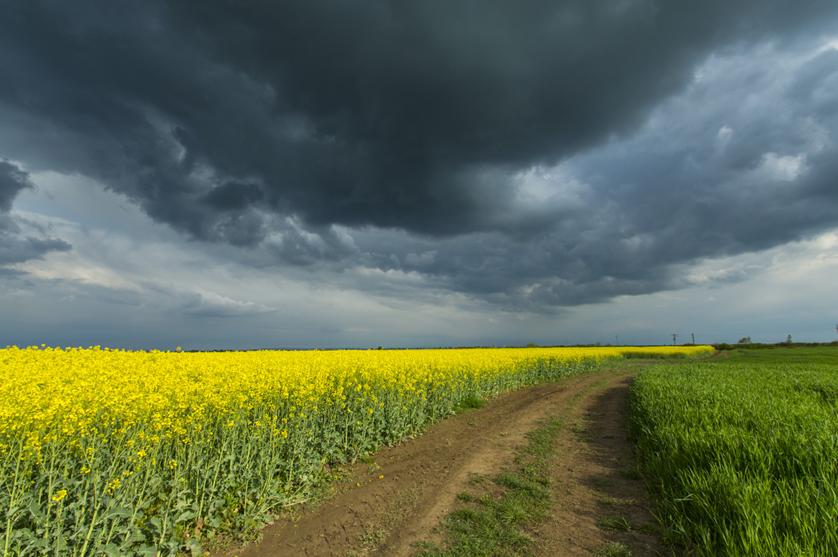 Alterações climáticas em risco de mudar a dieta europeia
