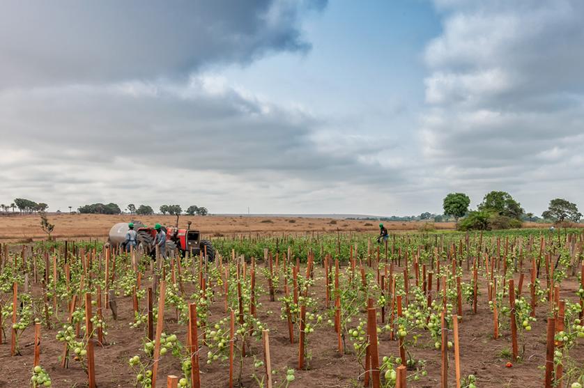 Portugal e Angola reafirmam cooperação agrícola e veterinária