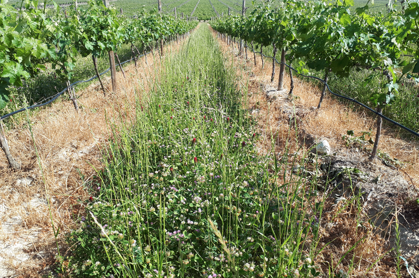 No dia Mundial da Biodiversidade, ANIPLA relembra: Agricultura e Biodiversidade, um equilíbrio fundamental