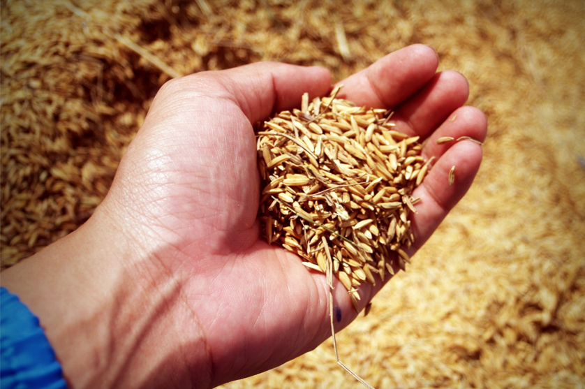 Ministério da Agricultura disponibiliza mais 300 M€ em formações sobre Agricultura Familiar