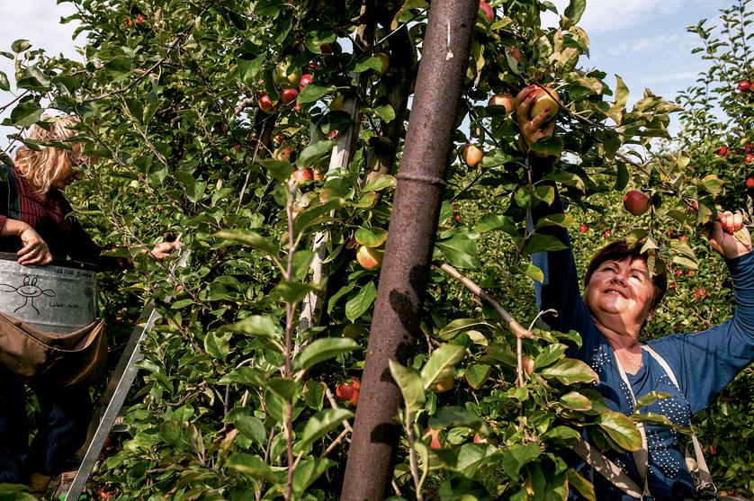 Agricultores querem garantia de combustíveis para a época alta das colheitas
