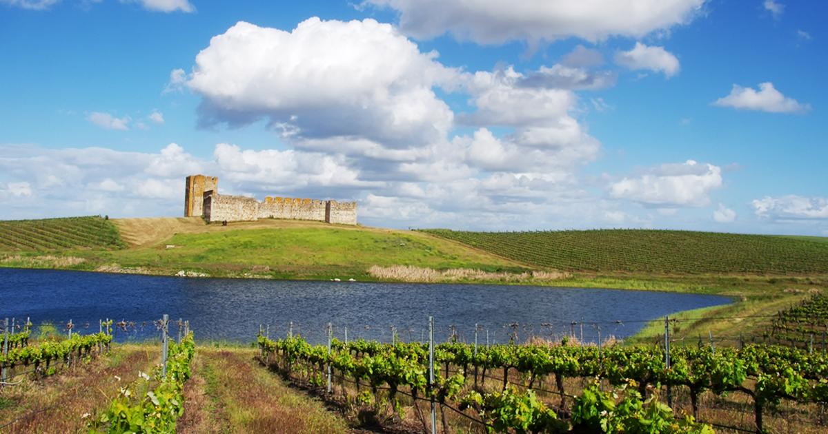 Alentejo prevê subida na produção de vinho
